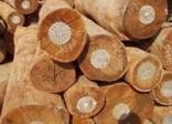 Kinh nghiệm lựa chọn gỗ cho nội thất nhà bạn